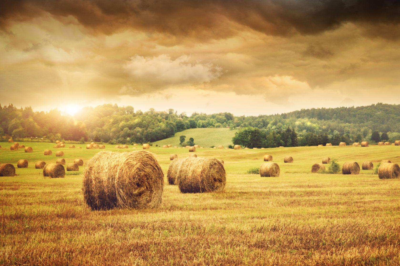 produkcja zbóż
